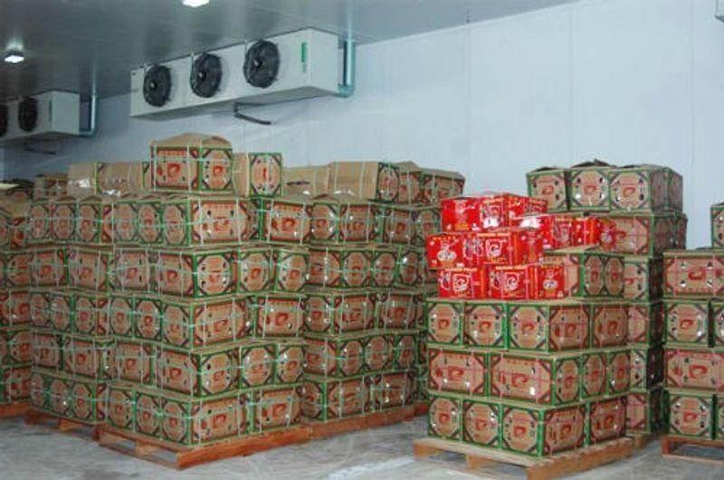 Chuyên cung cấp lắp đặt kho lạnh bảo quản trái cây giá sỉ, giá bán buôn