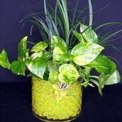 hạt tinh thể trồng cây cắm hoa trang trígiá sỉ 3k/gói 120 hạt1 triệu/400gói giá sỉ