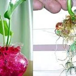 hạt tinh thể trồng cây giá sỉ 3k/gói 120 hạt giá sỉ
