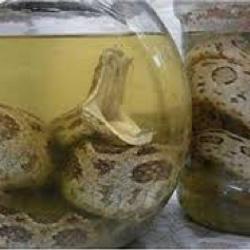 Chuyên cung cấp rượu quê men nguyên chất rượu rắn phục vụ các bác có tuổi a huy giá sỉ