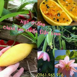 Hạt giống Chanh Leo Chuối giá sỉ