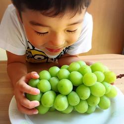 Nho xanh sữa - mẫu đơn Shine Muscat Hàn Quốc giá sỉ