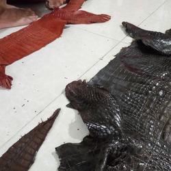 Bán sỉ thắt lưng da cá sấu giá sỉ