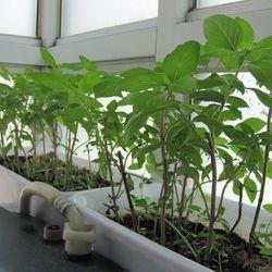 Hạt giống rau gia vị bán buôn bán sỉ nhiều loại tự chọn hạt giống giá sỉ