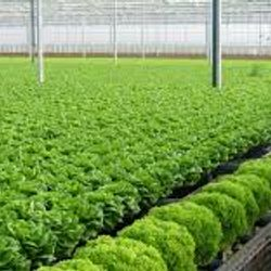 Hạt giống rau củ thông dụng nhiều loại Hatgionggiasi giá sỉ
