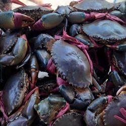 Cua Cà Mau dây nhỏ nhiều gạch thịt chắc và ngọt 2 - 25 con/kg