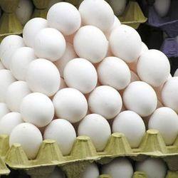 Trứng Gà Ta Giống Bảo Tồn Tươi Sạch giá sỉ