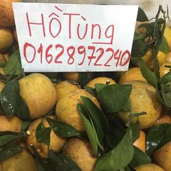 Cam Vinh Bắc Giang giá sỉ