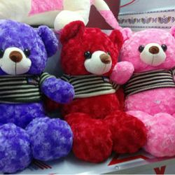 Gấu teddy quà tặng khổ 65cm giá sỉ
