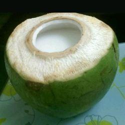 Rau câu trái dừa L3H giá sỉ
