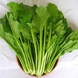 Combo 3 Hạt giống Cải Ngọt Cọng Xanh 50G Hạt giống Rau mầm trắng Newzeland 50G Hạt giống Rau cải mầm Đậu Hà Lan 50G giá sỉ