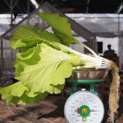 Combo 3 Hạt giống Cải Bẹ Lá Vàng 20G Hạt giống Rau mầm củ cải đỏ 20G HẠT GIỐNG HOA CÚC SUSI NHIỀU MÀU RV - 42 1G giá sỉ