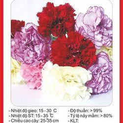 Hạt giống hoa Cẩm Chướng Kép mix nhiều màu - 50 hạt giá sỉ