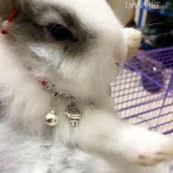 thỏ Nhật siêu kute giá sỉ