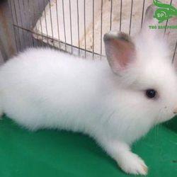 Thỏ Nhật cute giá sỉ