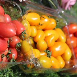 Cà chua trái cây 3 màu - Thảo Đà Lạt giá sỉ