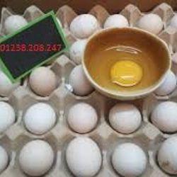Trứng gà ác giá sỉ