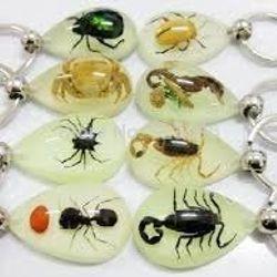 Móc khóa côn trùng giá sỉ