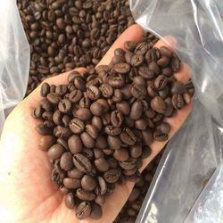 Sỉ Cà phê Robusta Rang MỘC/Xay Nguyên Chất Dòng PREMIUM giá sỉ