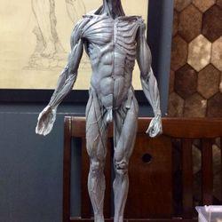 tượng anatomy chuẩn từ Đưc giá sỉ