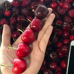 Cherry Mỹ chính gốc giá sỉ