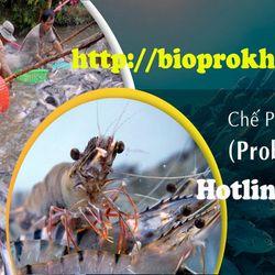 Men xử lý nước BZT Biopro Khánh Hòa giá sỉ
