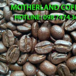 Cà phê Arabica chế biến ướt giá sỉ