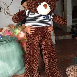 Gấu Bông Teddy Mềm Mịn giá sỉ