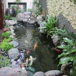 Chuyên thiết kế thi công hồ cá chép Nhật - giá sỉ