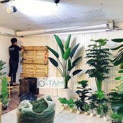 Chậu cây bàng Singapore giả cao 80cm số 75