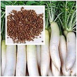 hạt cải củ cải trắng giá sỉ, giá bán buôn