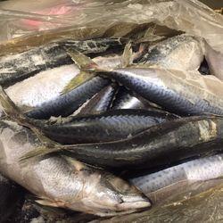Cá Saba Nhật-Hàn Quốc-Đài Loan-TQ Thủy Hải Sản đông lạnh giá sỉ
