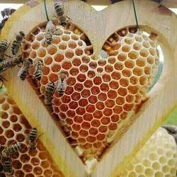 mật ong nguyên chất giá sỉ