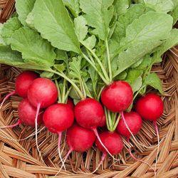 hạt giống củ cải đỏ gói 5 gam hạt giá sỉ