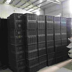 Chuyên cung cấp rổ quýt – 20kg Phú Hòa An cao giá sỉ