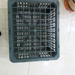 Bán buôn rổ xoài 20kg Phú Hòa An số lượng lớn giá rẻ giá sỉ