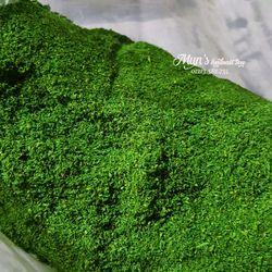Cỏ bột rêu làm mô hình phủ chậu hoa - Hũ 50 gram