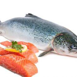 Cá Hồi nguyên con 140k/kg giá sỉ