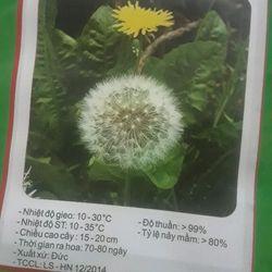 Hạt giống Hoa Bồ Công Anh giá sỉ