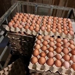 Trứng gà công nghiệp hữu cơ giá sỉ