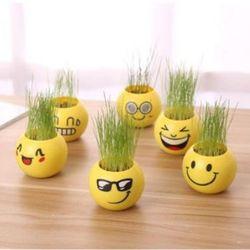 Chậu cây để bàn Emoji mặt cảm xúc