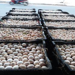 Trứng gà ta giá sỉ 16000đ giá sỉ