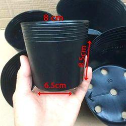 5.000 Chậu nhựa ươm cây C3 8x6.5x8.5 nhựa pe dẻo bền -77200