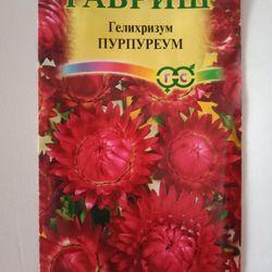 Hạt giống hoa cúc bất tử hồng đậm giá sỉ