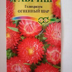 Hạt giống hoa cúc bất tử đỏ giá sỉ