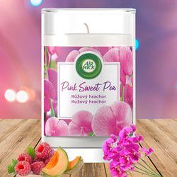 Ly nến thơm tinh dầu Air Wick Pink Sweet Pea 310g XXL QT06524 - hoa đậu Hà Lan giá sỉ